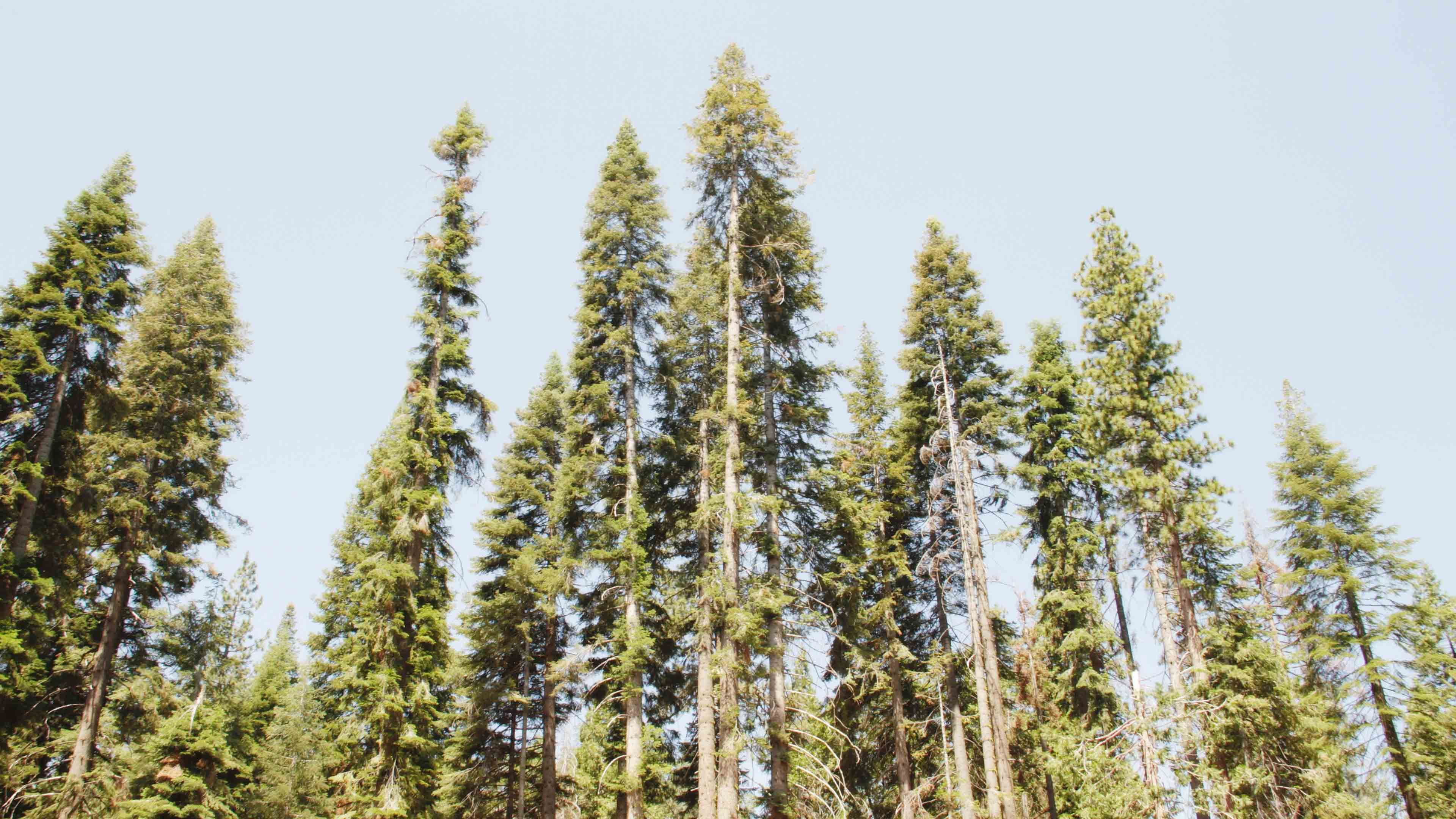 The Forest Png The Forest Png The Forest Png Stock Photography Free Forest Wallpaper Pc