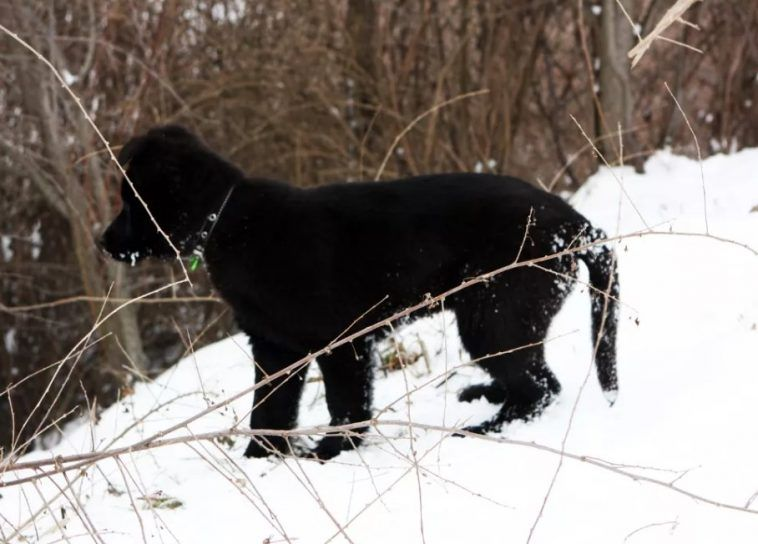 40 Male Names For Black Dogs Labrador Puppy Training Best Dog Names Dogs