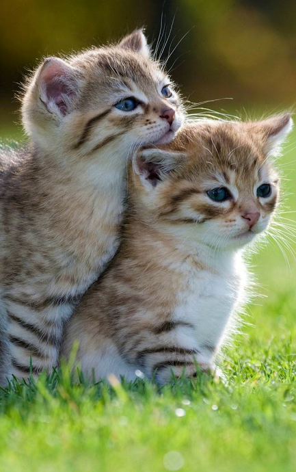 That`s whait I like — From Kittens cutest