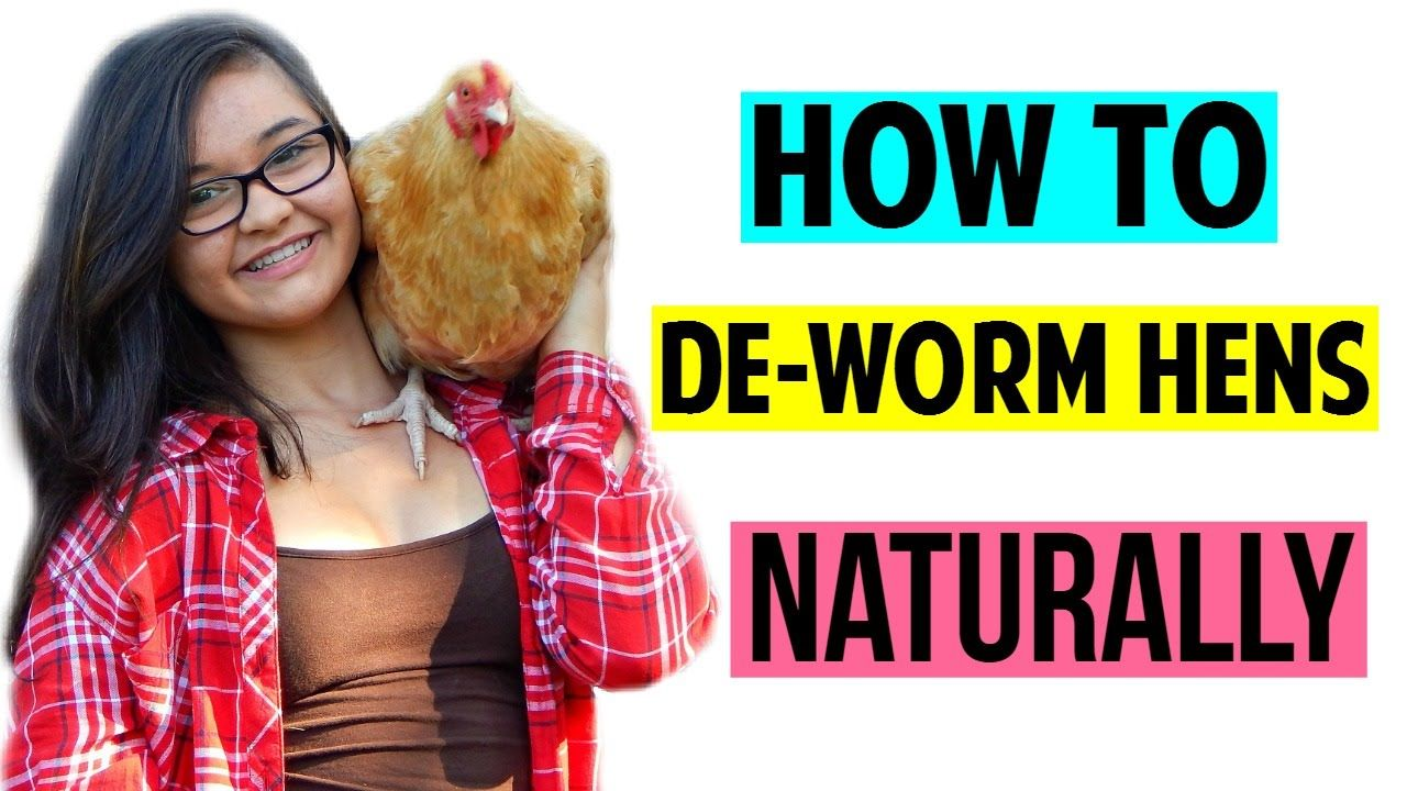 How to deworm hens naturally youtube hens nature