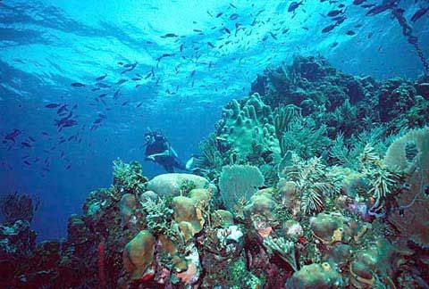 Another type of aquatic biome is the coral reef category. Coral ...
