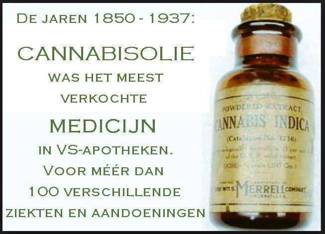 Cannabis olie ♥