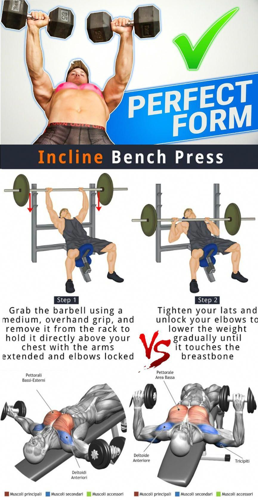 Seeking Out More About Decline Bench Press Then Read On Flatbenchpress Workout Pictures Chest Workout Bench Press