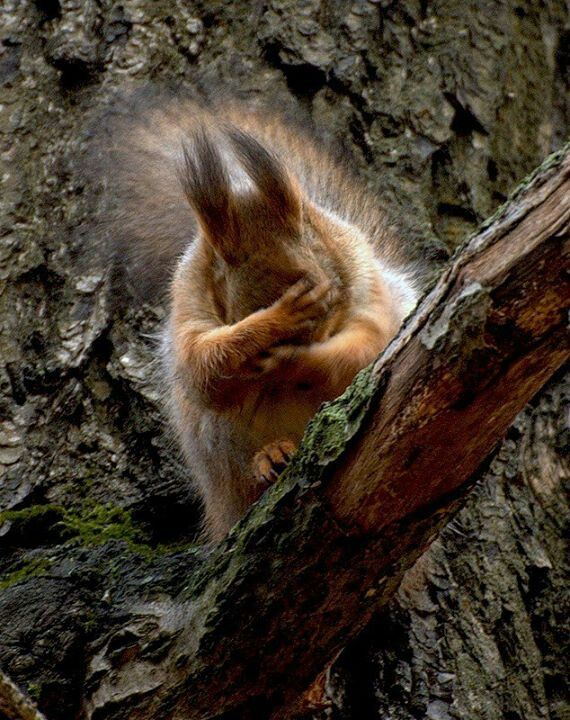 Oh, NO! I lost another nut! :)