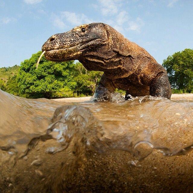 Amazing creature  by Nat geo