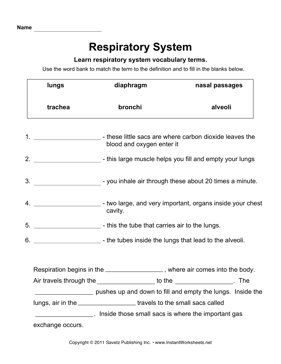 Printables Respiratory System Worksheet respiratory system here is a free worksheet or system