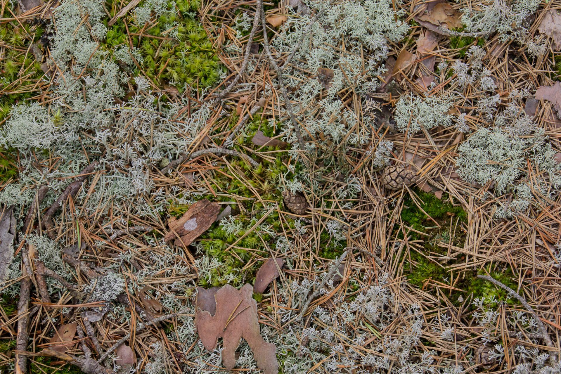 Forest Floor . Wallpapers #761651, Resolution : 1920x1280 ... Dark Forest Floor Texture