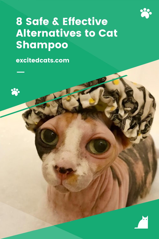 8 Safe Effective Alternatives To Cat Shampoo Cat Shampoo Cats Cat Diy
