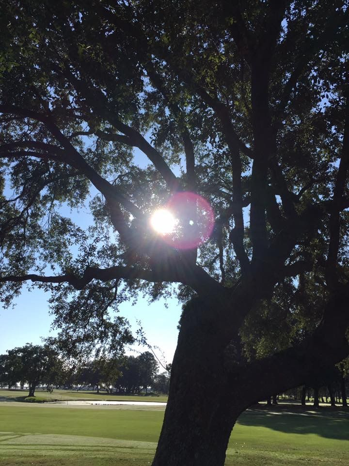 Charleston Country Club. Sun in the oaks.  By:  Marcy Perry