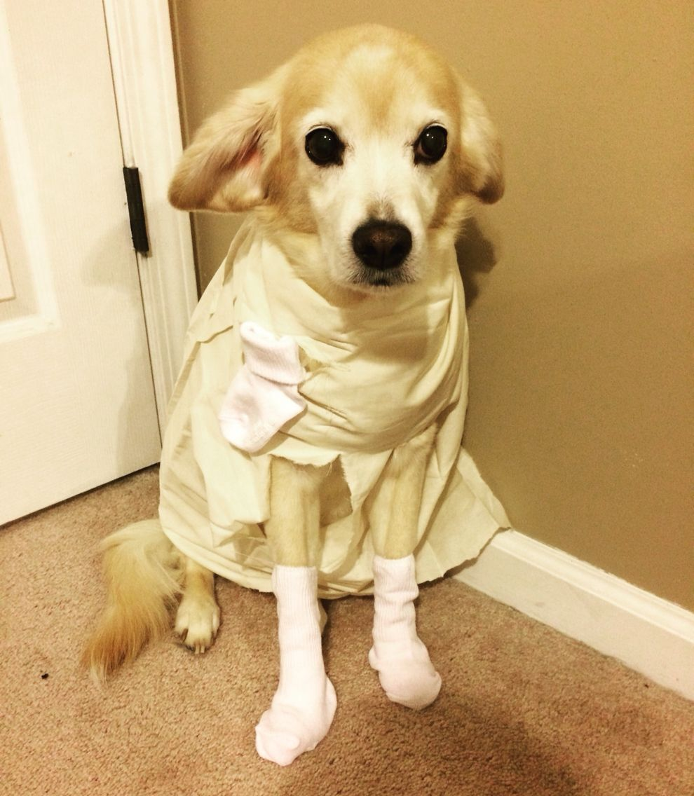 Pet Costume Ideas Dobby From Harry Potter Harry Potter Dog