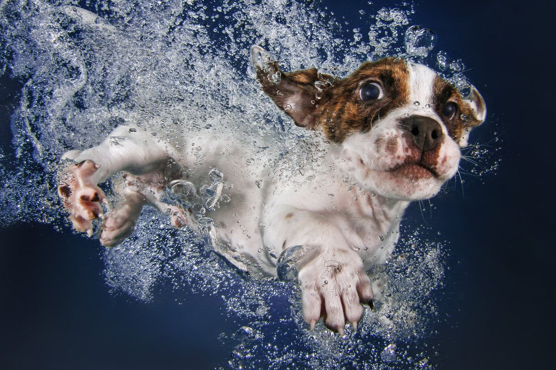 Popsicle: puggle mix, 9 weeks - interview with photographer Seth Casteel on his book Underwater Puppies