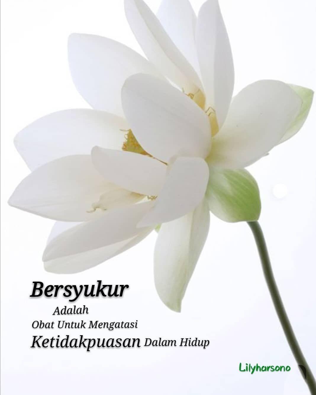Bersyukur Islamic Inspirational Quotes Good Morning Quotes Islamic Quotes