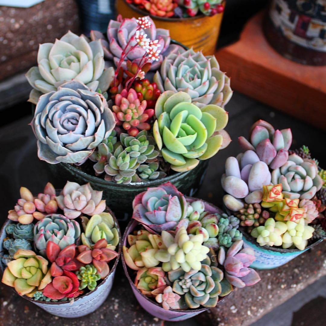 Cute succulents suculentas suculentas cactus y for Vivero de plantas exoticas