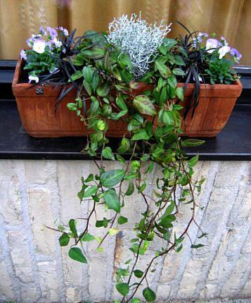 Groenblijvende Planten Voor Bloembakken.Bloembakken Opvullen Met Winterharde Planten Bloembakken