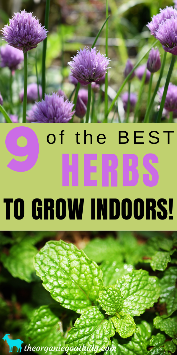 9 Of The Best Herbs To Grow Indoors Growing Herbs 640 x 480