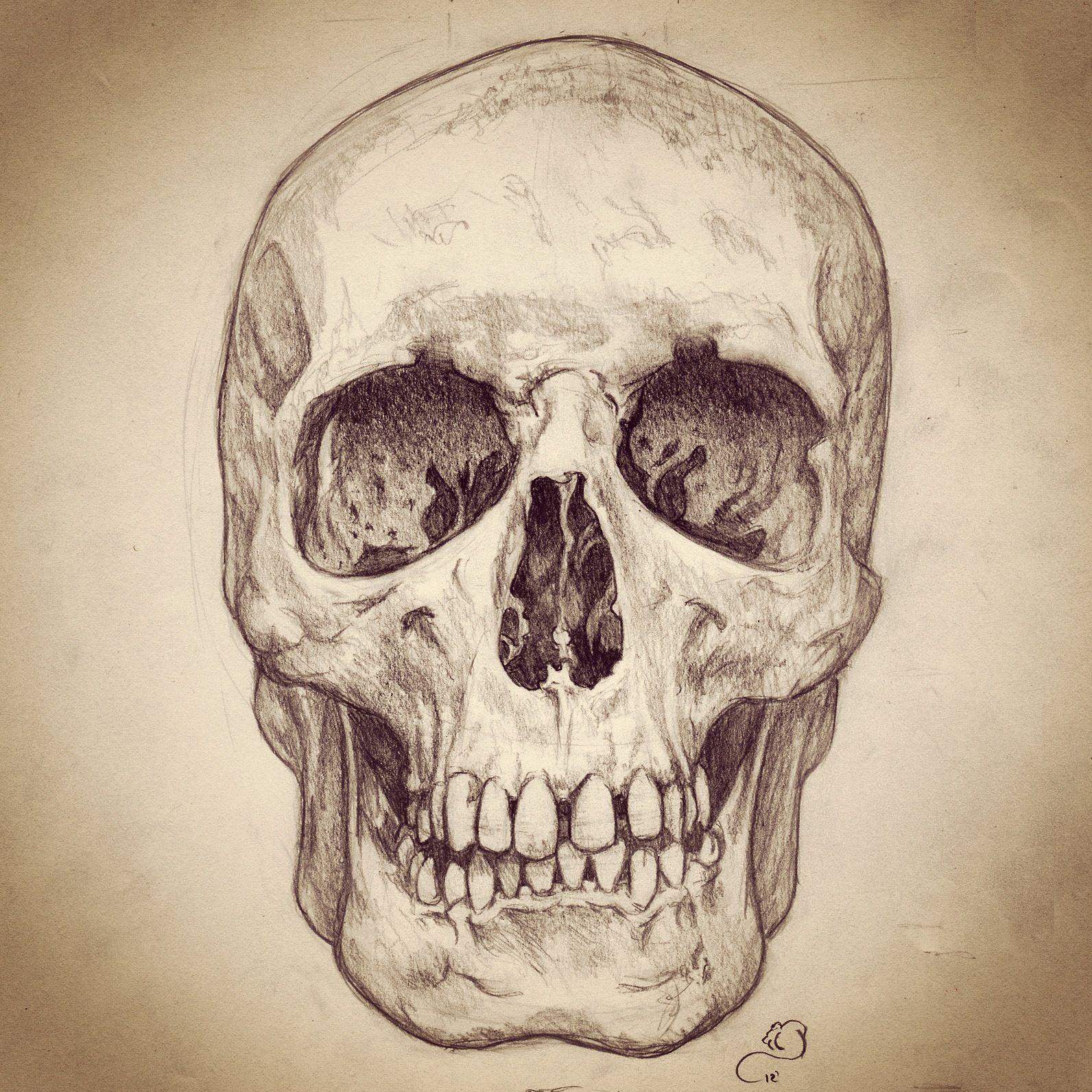 Pencil sketch of human skull skulls pinterest human skull