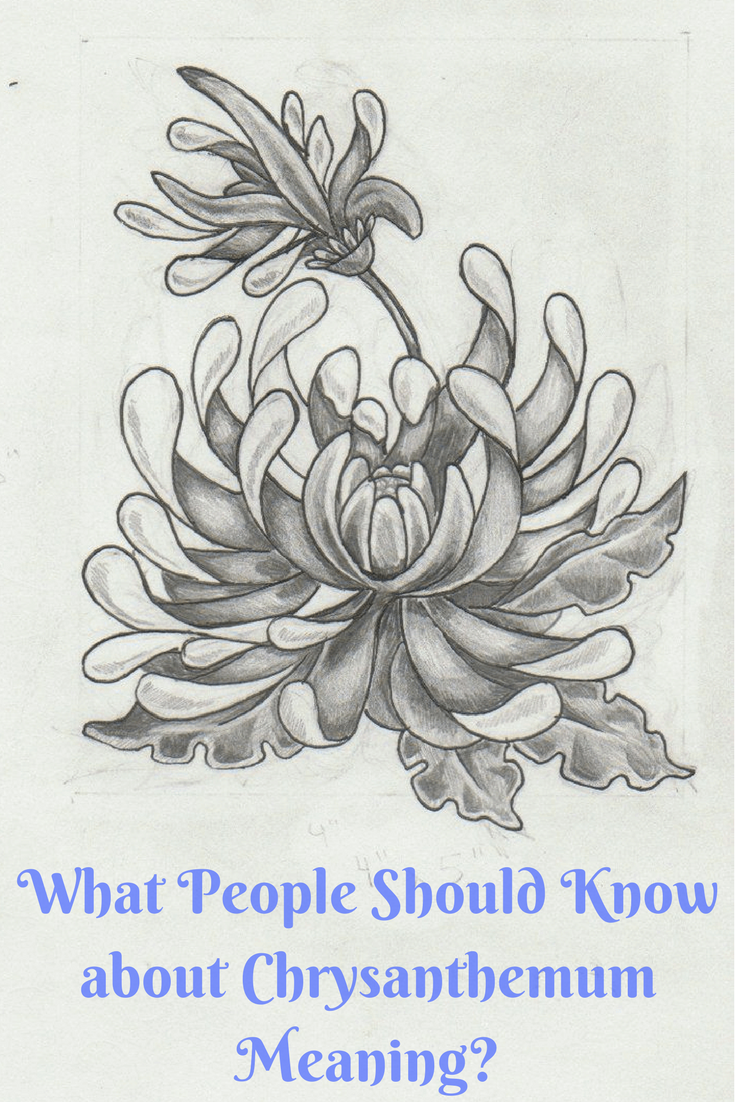 What People Should Know About Chrysanthemum Meaning Chrysanthemum Tattoo Birth Flower Tattoos Chrysanthemum Drawing