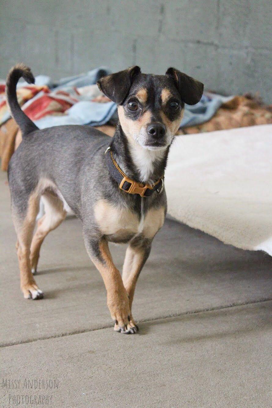 Gymnasts & Dogs 5/5 (1) Animal photography, Pet adoption