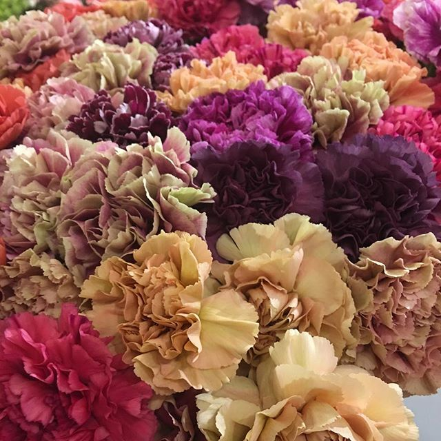 Love The New Carnation Varieties And They Are Making A Comeback Flowersfromallovertheworld Iftf2016 Carnations Passiona Carnations Holland Flowers Flowers