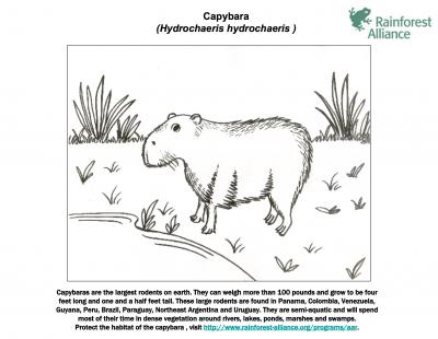 Image Result For Deutschland Coloring Capybara Page Capybara Sketches Moose Art