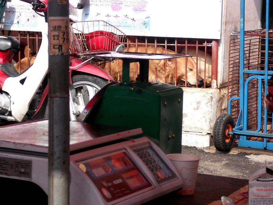 handel in hondenvlees in Zuid-Korea - bezet voor de Dieren!