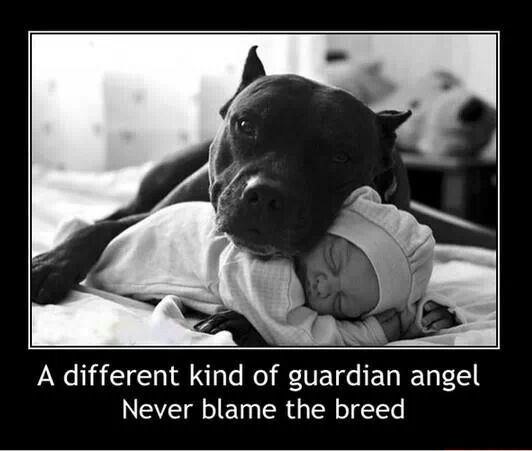 37 Pictures That Will Restore Your Faith In Pit Bulls Nanny Dog