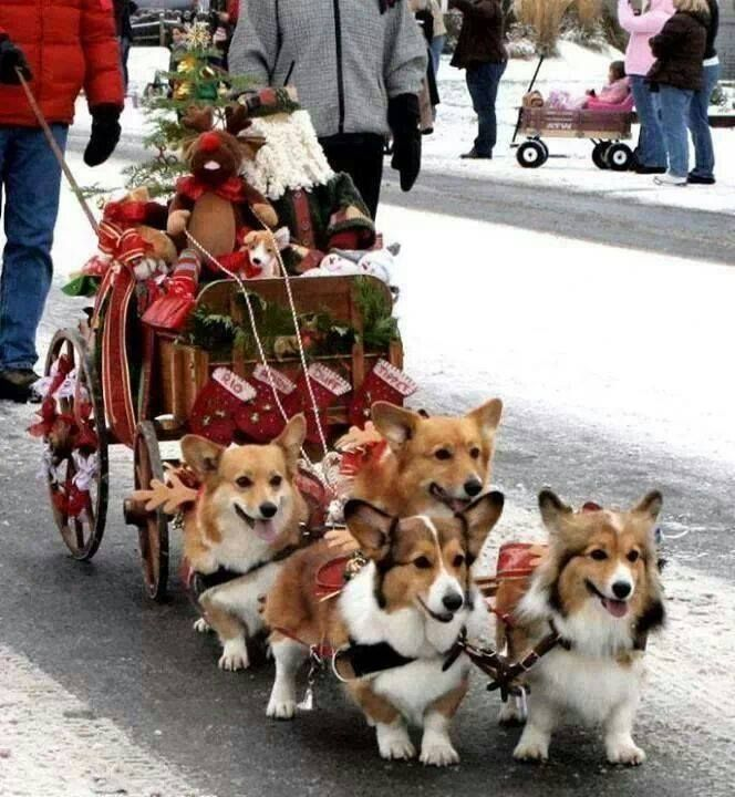 Merry Corgi Christmas