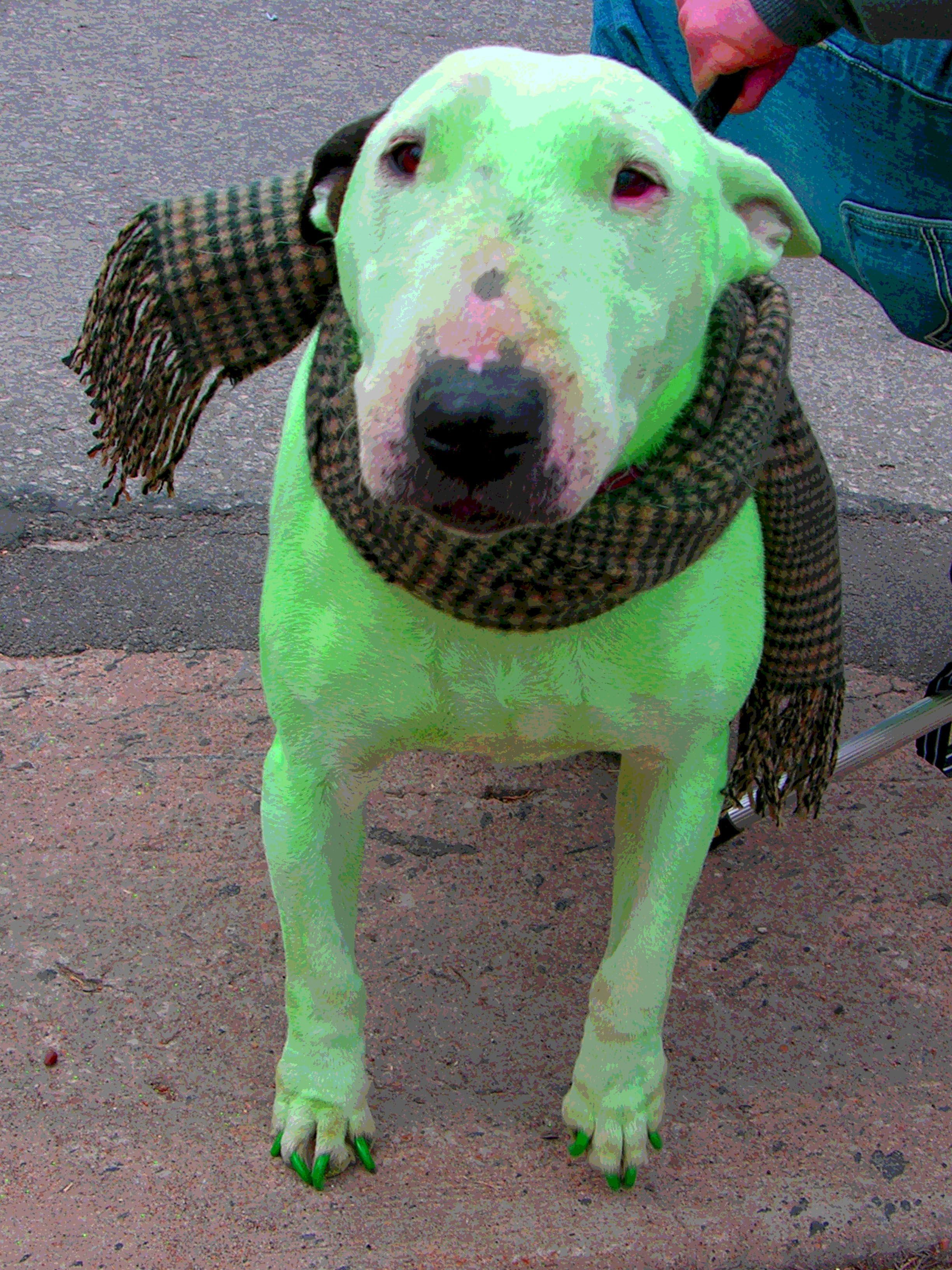 St Pat S Now With Green Dogs Dogs Cute Animals Animals