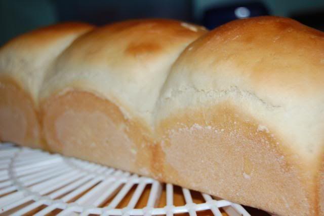 taiwan bread a thermomix forum recipe recette. Black Bedroom Furniture Sets. Home Design Ideas