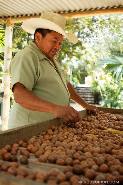 Macadamia Farm Tour Guide