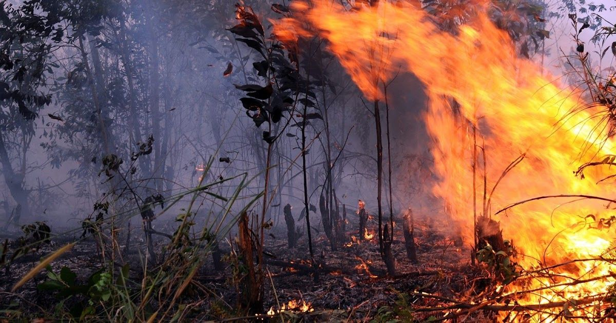 Gambar Ilustrasi Kebakaran Hutan Greenpeace Bantah Klaim Tak Ada Kebakaran Hutan Selama 3 Tahun Kebakaran Hutan Dan Lahan Indonesia Gambar Hutan Ilustrasi