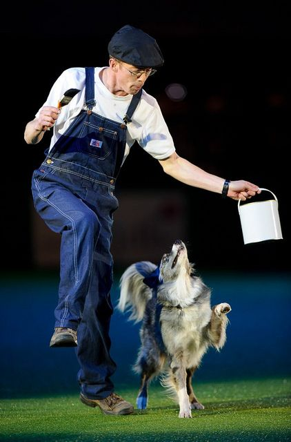 Crufts11ma 0290 Worlds Largest Dog Border Collie Collie