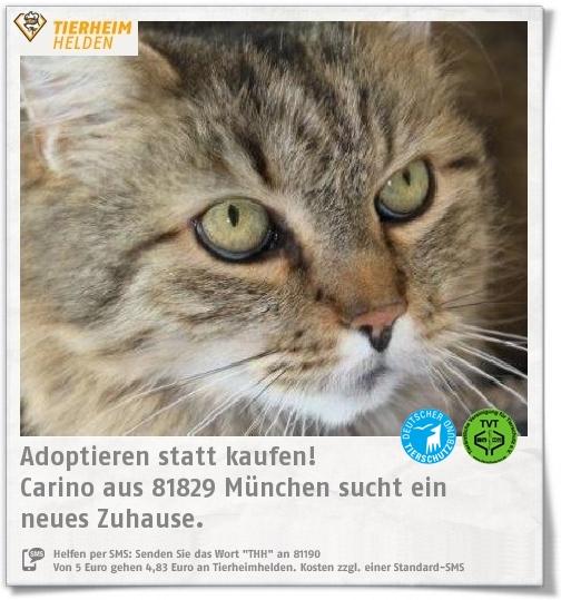 Carino aus dem Tierheim München sucht ein Zuhause.  https://www.tierheimhelden.de/katze/tierheim-muenchen/ekh/carino/13400-1/  Nach einer Eingewöhnungszeit ist Carino anhänglich und will Aufmerksamkeit. Ein Haushalt ohne Kinder wäre ein muss. Er hat einige Verhaltensprobleme, sodass katzenerfahren Tierfreunde gesucht werden.