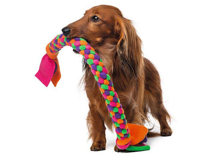 Hunde Spiele 1001