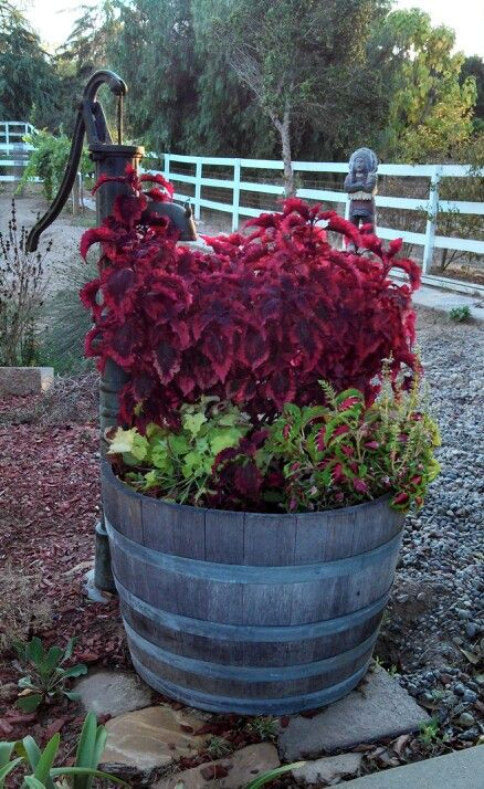 Wine Barrel As A Giant Pot With A Old Water Pump For