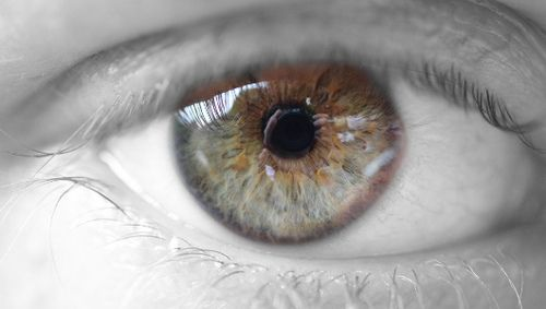 Vision evolved 700 million years ago, researchers findIrish researchers are no doubt smiling after they find the origin of eyes.