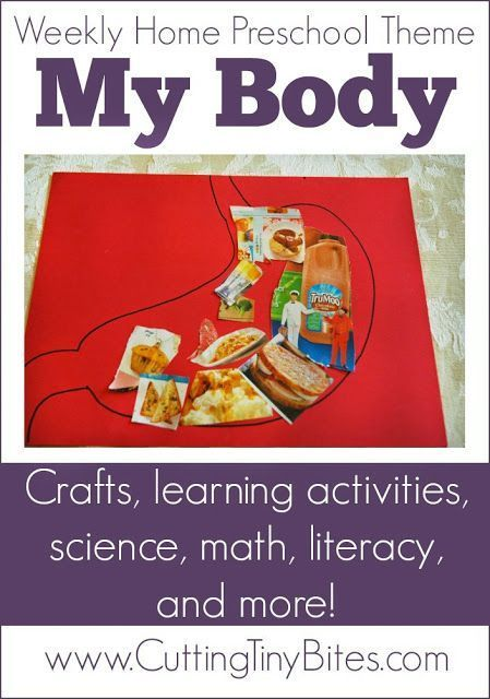 Weekly Home Preschool Theme My Body Literacy Homeschool And Math