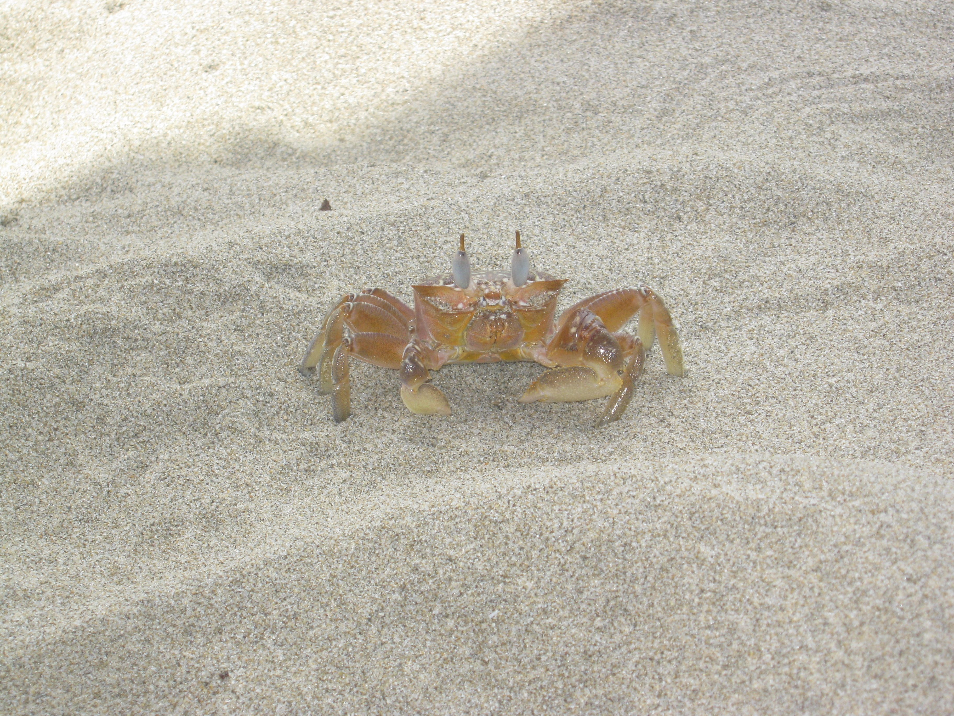 little crab .. O.O
