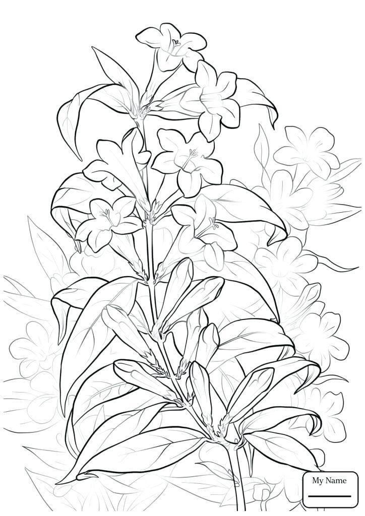 Jasmine Flower Coloring Pages Princess Jasmine Coloring Page Flower Coloring Pages Coloring Pages Printable Flower Coloring Pages