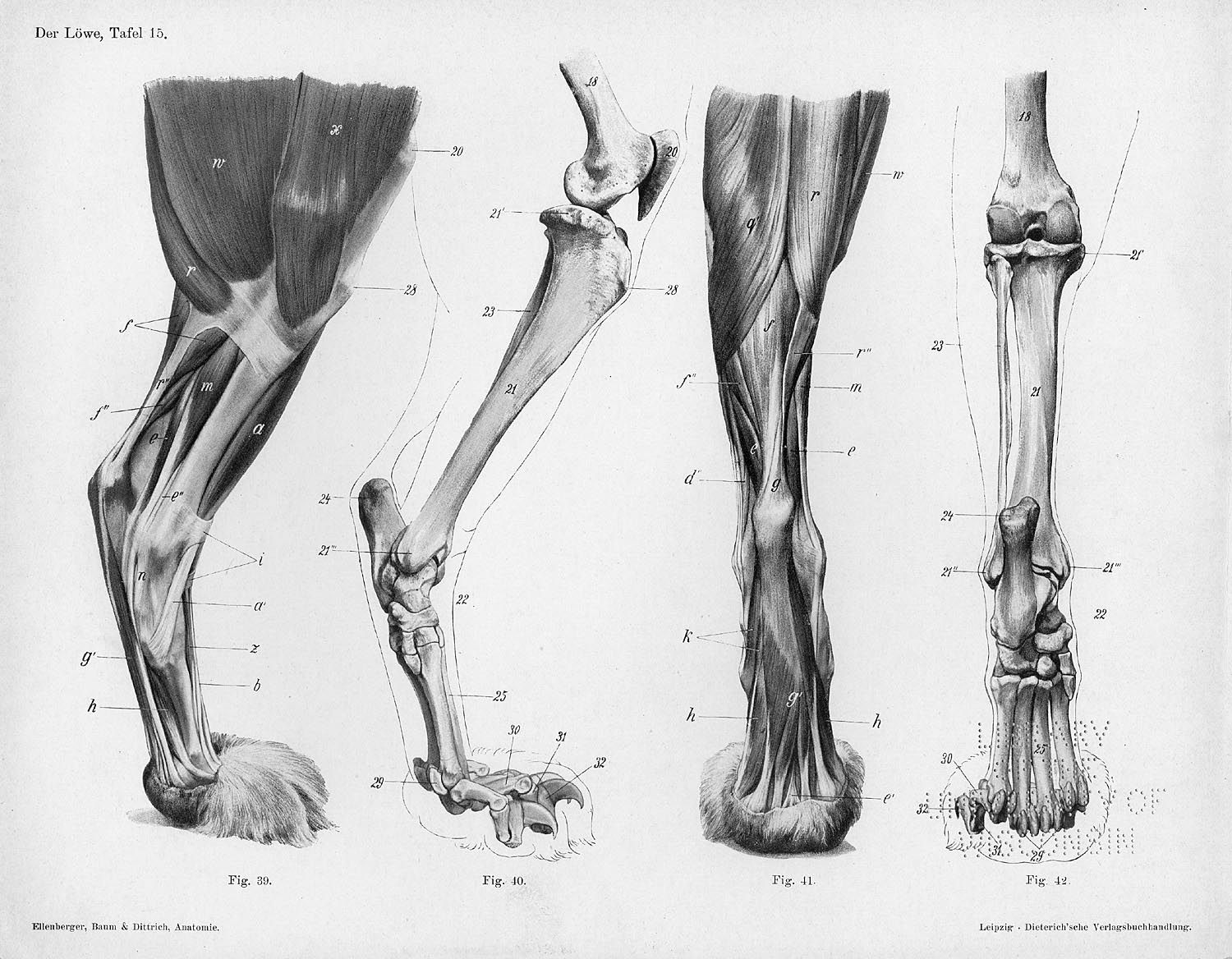 These are medial, caudal and plantar views of the