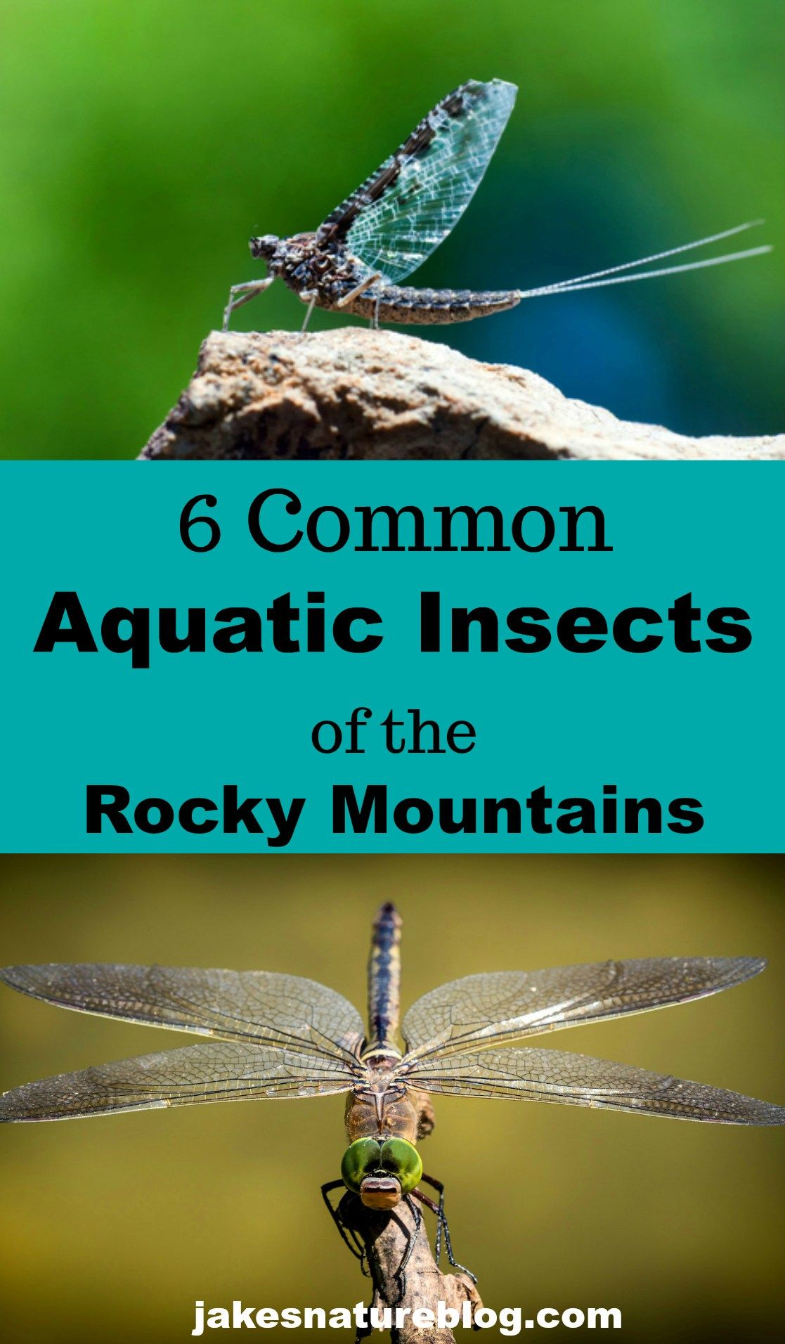 6 common aquatic insects of the rocky mountains jakes