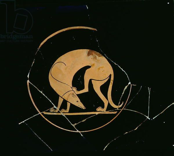 Attic Red Figure Cup Detail Of A Laconian Hound Scratching His Head By The Euergides Painter C 500 Bc Ceramic Greek Art Ancient Art Ancient Greek Art