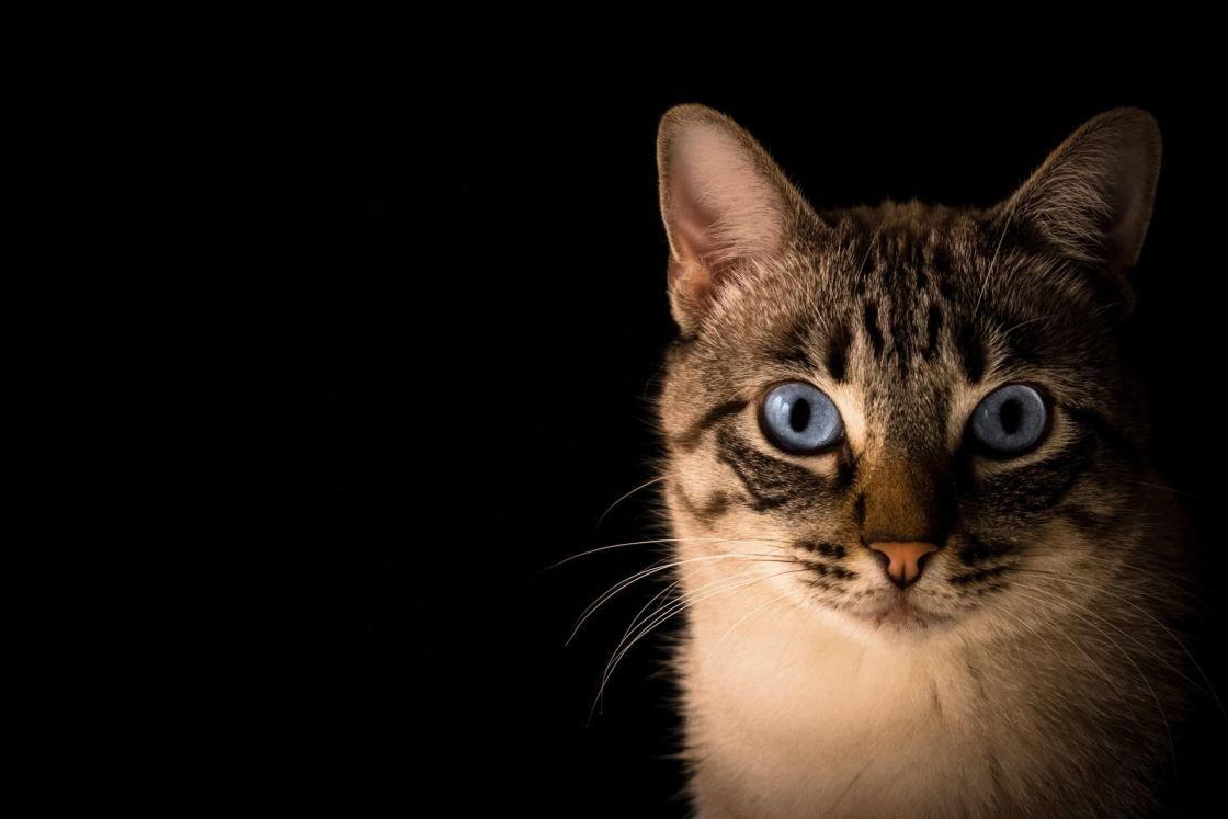 Chat Voyage Onirique Chat Tigre Chats Gris Chats Bleus