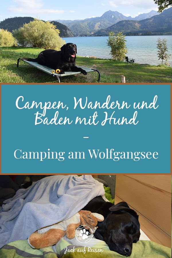 Photo of Camping, hiking and swimming with a dog – Camping with dog on Wolfgangsee