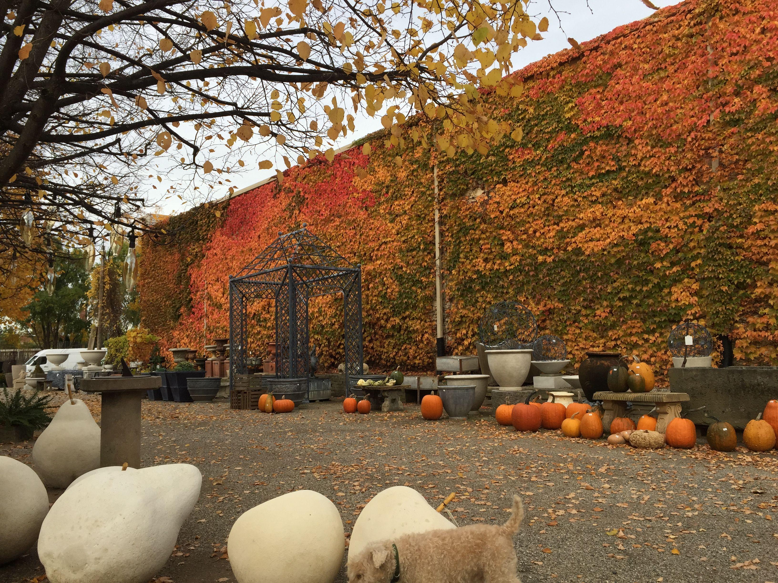 the Boston Ivy 027 | vine to buy SA | Pinterest | Storage rental ...
