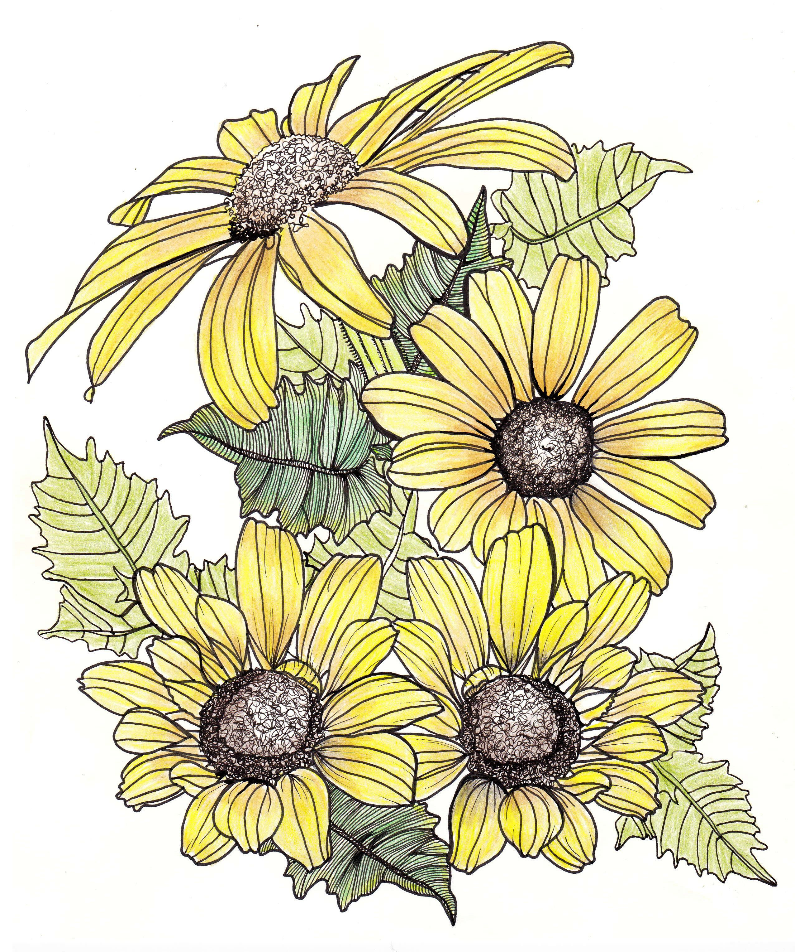 Line Drawing Flowers Yellow Daisies And Leaves Drawings