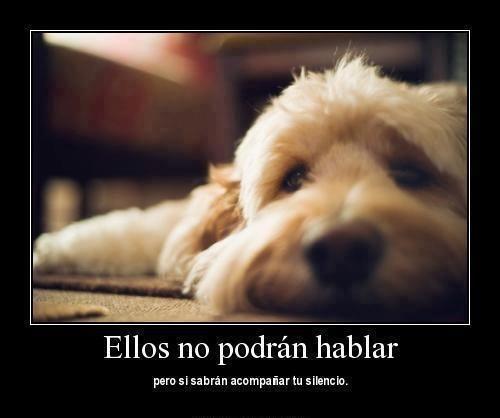 Pin De Graciela Canul En Fidelidad Perros Perros Frases Y Amor