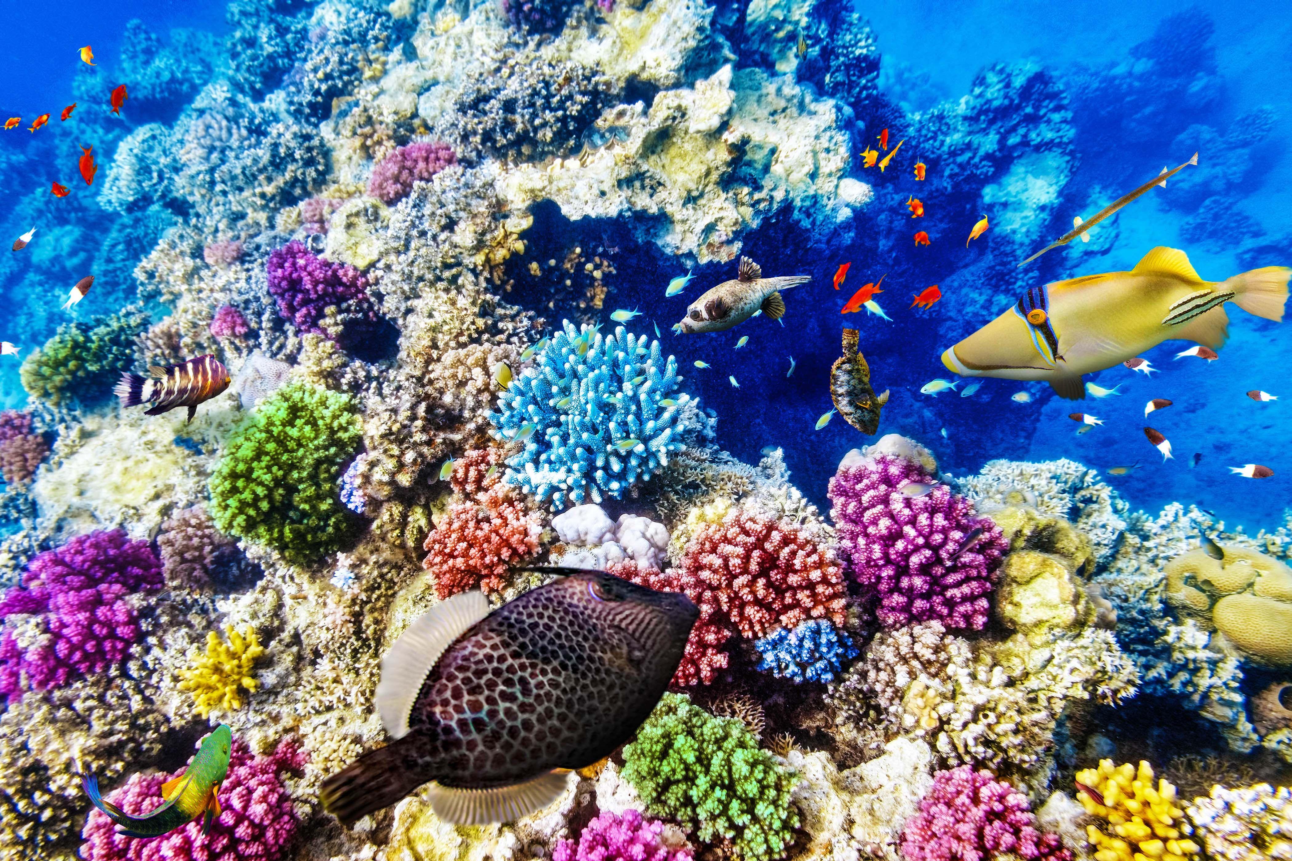 Great Barrier Reef Ist F 252 R Tot Erkl 228 Rt Worden