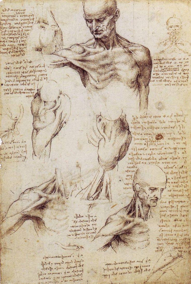 Leonardo da Vinci - Anatomical Studies | Muscle Chart - Anatomy ...
