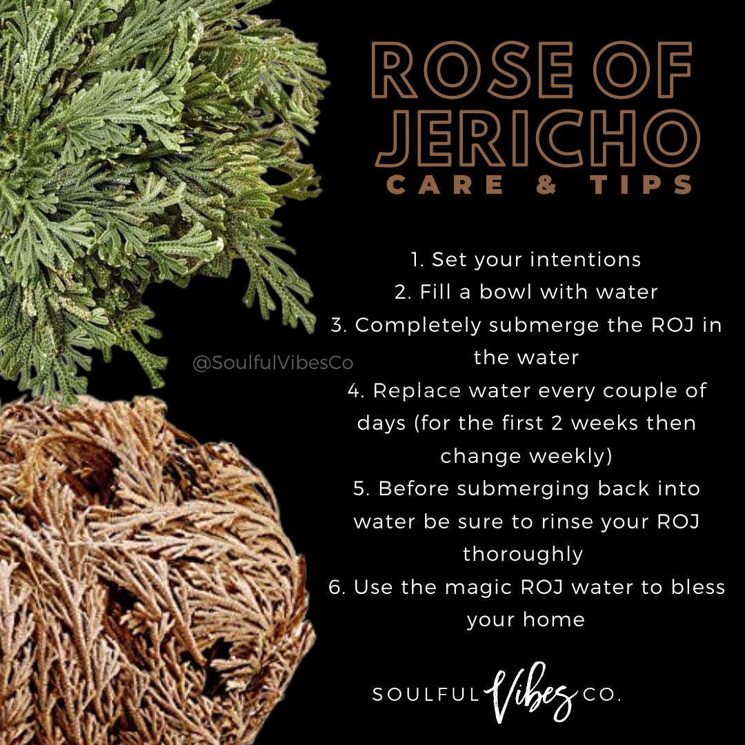 ROJ Care in 2020 | Herbal magic, Types of moss, Herbs